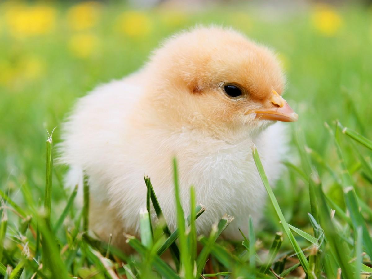 Vrolijk pasen! Alle PBM voor professionele eierrapers op 'n rijtje.