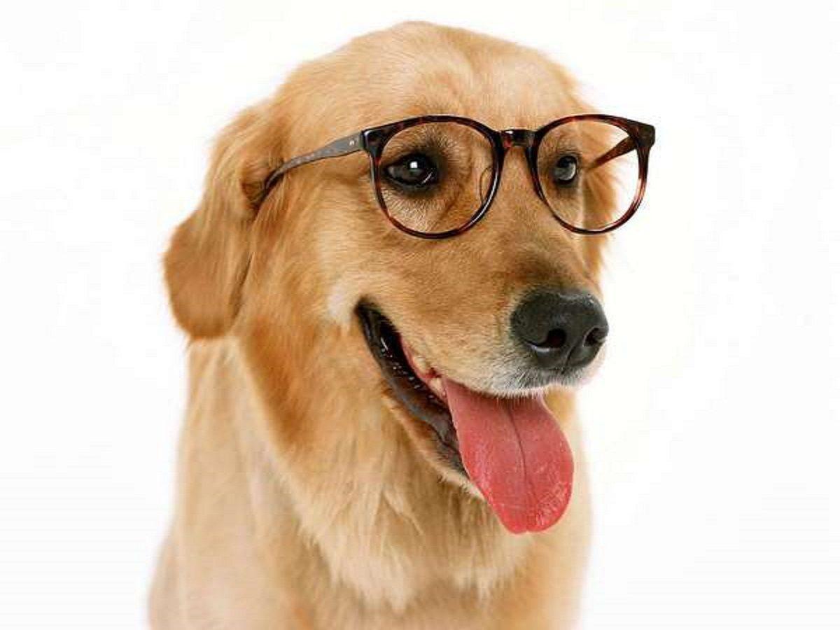 Oog voor detail: zeven vragen over veiligheidsbrillen